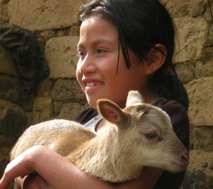 bimba guatemala cefa